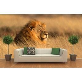 Lev (126 x 84 cm) -  Fototapeta na zeď