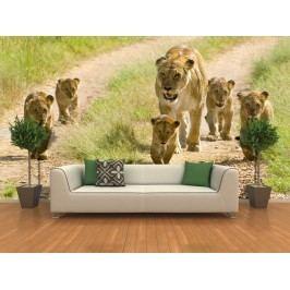 Lví rodina (126 x 84 cm) -  Fototapeta na zeď