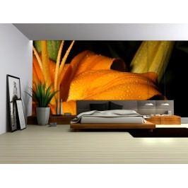 Oranžový květ (126 x 84 cm) -  Fototapeta na zeď