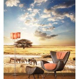 Safari 2 (126 x 121 cm) -  Fototapeta na zeď
