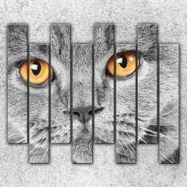 Kočičí pohled 2 (160 x 140 cm) -  Osmidilný obraz
