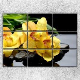 Žluté orchideje na kamenech 2 (210 x 150 cm) -  Devítidílný obraz