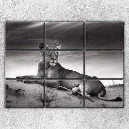 Ležící lvice (210 x 150 cm) -  Devítidílný obraz