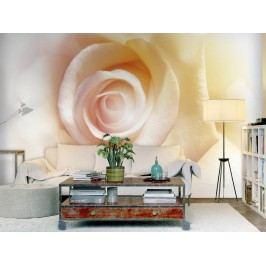 Murando DeLuxe Tapeta čajové růže 200x140 cm