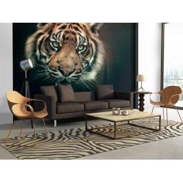Murando DeLuxe Tapeta tygr bengálský 150x116 cm
