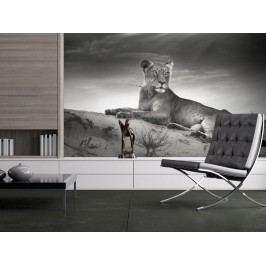 Murando DeLuxe Fototapeta (150x116 cm) -  Šelma v odstínech šedi