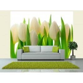 Murando DeLuxe Fototapeta bílé tulipány 150x116 cm
